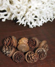 Pine Cone Acorns- Natural Caps with Little Pinecones - product images  of