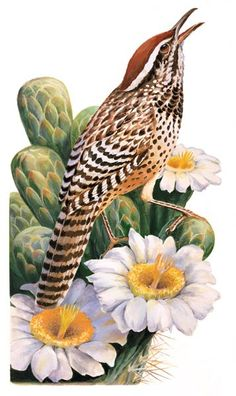 Arizona State Bird and Flower Cactus Wren and Saguaro Cactus Blossom Counted Cross Stitch Pattern Cactus Art, Cactus Flower, Arizona Birds, Arizona State, Arizona Cactus, Tucson Arizona, Cactus Blossoms, State Birds, Southwest Art