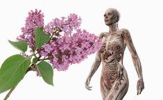 Dych berúca čarovná vôňa orgovánu je jedným z najvýraznejších symbolov jari. Okrem romantickej farby a nezabudnuteľnej arómy má však aj jednu ďalšiu unikátnu vlastnosť. Tieto drobné kvietky môžete využiť na prípravu liečivého oleja. Nielen krásne vonia, pomôže vám zmierniť mnohé zdravotné problémy. Orgován obsahuje veľké množstvo kyseliny askorbovej, éterických olejov a flavonoidov, ktoré majú pozitívny... Garden Sculpture, Herbalism, Buddha, Statue, Outdoor Decor, Food, Herbal Medicine, Essen, Meals