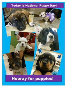 """Today is National Puppy Day and we have seen some pretty adorable pups recently, follow our """"New Faces"""" board to keep up with the cuteness!"""