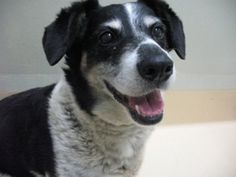 Princess Peach is an older Terrier mix who may be a bit shy until she is comfortable in her new surroundings. On Tuesdays she is available to seniors 60 or older without an adoption fee in recognition of the positive benefits of pet companionship that have been documented for seniors. Visit her at the Oregon Humane Society today!