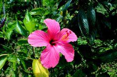 7/22(金)バリ島ウブドのお天気は晴れ。室内温度26.7℃、湿度77%。やっと晴れてくれました!数日乾かなかった洗濯物も、カラッと乾いてくれる事でしょう♪嬉しい~!