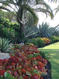 Designs By Todd MacLean Outdoor Living tropical landscape