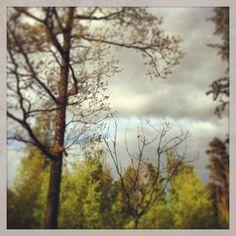 The magic wood in Värnamo, part 1