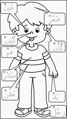 جسم الانسان للأطفال