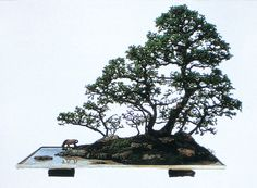 Image from http://www.happybonsai.com/wp-content/uploads/2010/07/Landscape-Bonsai-Penjing-01.jpg.