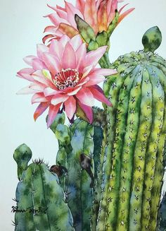 Tu recepcja : Watercolors by Kitipong Maksin, an artist from Bangkok, Thailand Cactus Painting, Watercolor Cactus, Cactus Art, Watercolor Art, Cactus Pictures, Art Aquarelle, Desert Art, Plant Drawing, Drawing Flowers