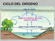 Study, Image, Cabo, Google, Iphone, Mind Maps, Geography, Medicine, Carbon Cycle