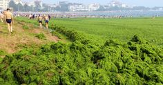 Beach of Qingdao - Sahndong - China