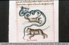 Codex Claustroneoburgensis 125