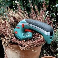 Was die Anzahl der Rosen im Straße bedeutet - myHOMEBOOK Baby Car Seats, Tips, Photosynthesis, Hardy Plants, Pink Flowers, Useful Life Hacks, Slate, Tips And Tricks, Counseling
