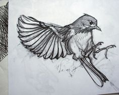 Google Image Result for http://www.roadsworth.com/main/thumbnails/thumb_20080116021424_bird-sketch.jpg