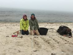 Employment and Volunteer Opportunites - Nantucket Conservation Foundation Employment Opportunities, Nantucket, Conservation, Foundation, Science, Projects, Log Projects, Science Comics, Foundation Series