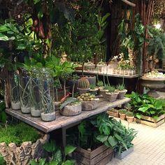 "131 Likes, 1 Comments - BANG & THY Blomsterkunst (@bangogthy) on Instagram: ""#bangogthy #plantenørd #plantedesign #botanik #flowershop #planteindretning #planterforalle…"""