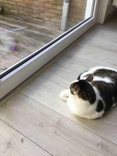 The best time of the day , to look outside to the birds 🐾🐥🐱💛