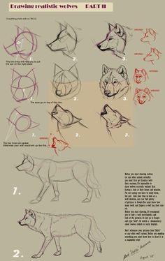 Lobos, wolfs, tutorial dibujo