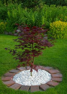 Beautify Your Garden with Landscaping Around Trees - Home & Garden trees. Beautify Your Ga Garden Deco, Garden Yard Ideas, Garden Trees, Garden Projects, Fence Ideas, Landscaping Around Trees, Small Front Yard Landscaping, Backyard Landscaping, Landscaping Company
