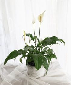 #FloralWhite gives you a chance to be an expert florist. Join our #flowerarranging class in #Brisbane and be a pro at creative #decoration of #flowers. All Flowers, Amazing Flowers, White Flowers, Beautiful Flower Arrangements, Flower Basket, Creative Decor, Flower Delivery, Brisbane, Centerpieces