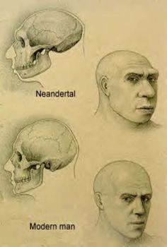 comparing-cranium-Cro-magnon-to-neanderthal.jpg (256×380)