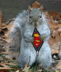 The hidden powers of squirrels