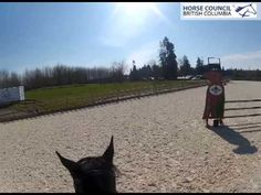Gateway Finale at Thunderbird Show Park in Langley, BC.  3'3 jumper course!