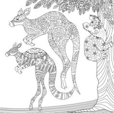 Kangaroo coloring page Adult ColouringAnimalsZentangles