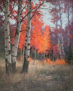 The Red Aspen by Jack Braman