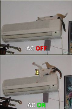 Last Time Kitty Will Sleep on A/C Unit | Funny Pictures, Quotes, Pics, Photos, Images. Videos of Really Very Cute animals.