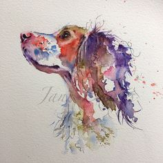 Pet portrait of a spaniel painted in watercolour by artist Jane Davies Order an oil painting of your pet now at www.petsinportrait.com