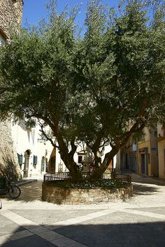 Olive Tree, supplying shadow for a small place in la Ponche.