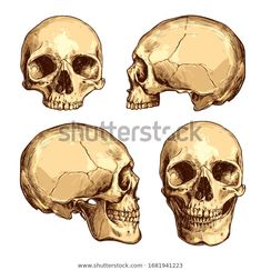 Colorful Skulls, Make Money Today, Skull Illustration, Anatomy Reference, Free Illustrations, How To Draw Hands, Horror, Clip Art, Drawings