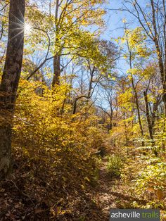 Hike the Appalachian Trail in NC from Deep Gap to Standing Indian Mountain