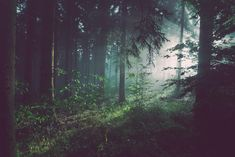Forest Wallpaper, Nature Wallpaper, Desktop Wallpapers, Wallpaper Wallpapers, Wallpaper Murals, Landscape Wallpaper, Tree Forest, Dark Forest, Hd Photos