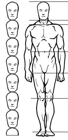 Body proportions sculpting and drawing reference.