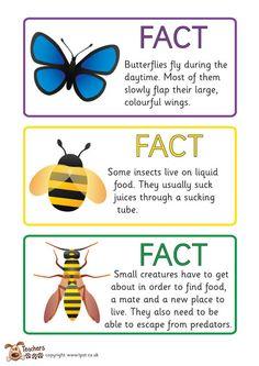 Teachers Pet - FREE minibeast fact cards