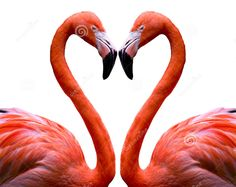 flamingo heart - Google Search