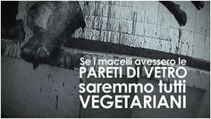 Anno Uno e gli allevamenti. Il deputato Bernini attiva la mail per le segnalazioni... » Fbsocialpet.com: il social forum per cani, gatti, cavalli, tutti gli animali