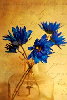 Flower Photography blue french script by moonlightphotography, via Etsy.