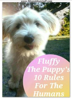 Fluffy The Puppy's 10 Rules For The Humans at Life and Dog stuff blog!