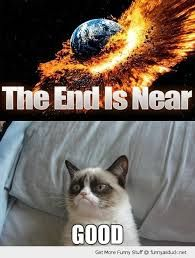 Grumpy Cat Grumpy cat best one yet. I love grumpy cat. dog faces That's my Grumpy Cat Grumpy Cat Quotes, Funny Grumpy Cat Memes, Funny Animal Jokes, Cute Funny Animals, Funny Cats, Funny Jokes, Hilarious, Fun Funny, Funny Stuff