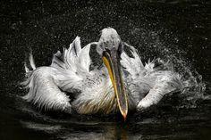 Sony World Photography Awards Best-of der Tierfotografie Wild Life, World Photography, Photography Awards, Photos 2016, Nature Photos, Animals Beautiful, Bald Eagle, Creatures, Birds