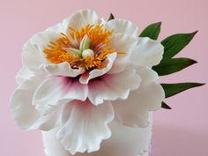 Flowers - Sugar Flower - Open Peony