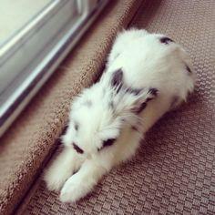 Eddy!!! Check out bunnymama on Instagram!!!