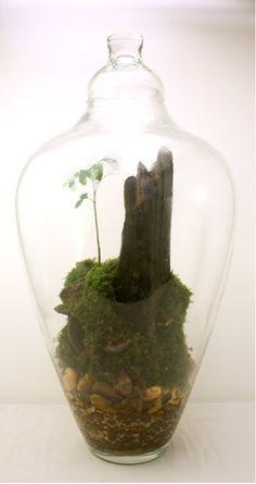 terrarium ouvert faire soi m me avec plante jardins d. Black Bedroom Furniture Sets. Home Design Ideas
