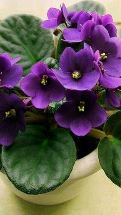 Browse my pictures of purple flowers to aid you in plant selection. Like blue blossoms, this bloom color has a soothing effect. Purple Flower Names, Purple Flowers, Exotic Flowers, Yellow Roses, Pink Roses, Big Garden, Easy Garden, Garden Kids, Garden Oasis