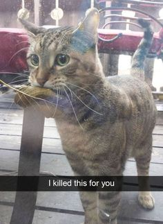 Funny Cat Pictures Funny Animals Pinterest - The 30 funniest animal snapchats of all time
