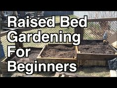 Tomatoes Gardening For Beginners [Gardening] Finding Your Gardening Bliss With Raised Beds For Novice To Experienced - Curious Cultivator - Building A Raised Garden, Raised Garden Beds, Raised Beds, Organic Soil, Organic Gardening Tips, Gardening Hacks, Organic Fruit, Urban Gardening, Vegetable Garden For Beginners