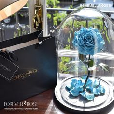 Forever Rose The World S Longest Lasting Roses Infinite Beauty Of A Is