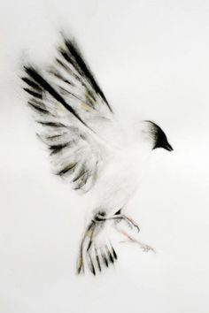 """ARTFINDER: Bird - Giclee Print by Kellas Campbell - The sunlight filters through the feathers of a sparrow with outstretched wings.  Fits into any ready-made 8"""" by 10"""" inch frame.  This is a signed and numbe..."""