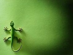 Green Gecko on Green Wall